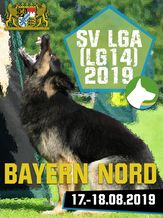 SV LGA (LG14) 2019 - IGP 3