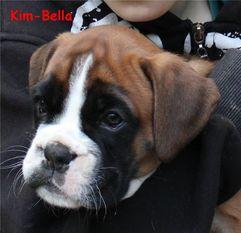 Kim-Bella vom Normannstein