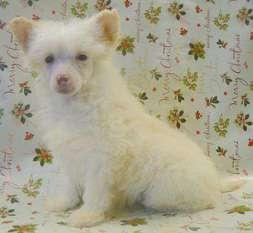 Doucai's Blonde Blagger