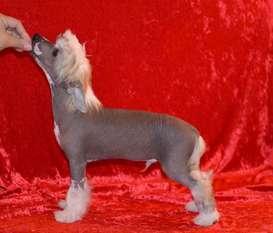 Lionheart Katch The Flax