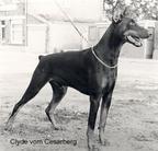 Clyde vom Cesarberg