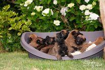 Pups Linck & Lara 3 weken