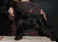 Dog-Otho's Cordelia