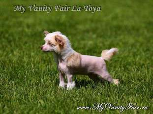 My Vanity Fair La-toya
