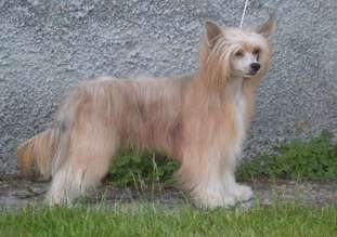 Anna Sky Kennel Absolutely Fabulous