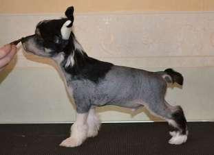 Fabulous Dogs Alfred Nobel