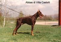 Abbas Di Villa Castelli
