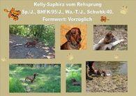 Kelly-Saphira vom Rehsprung