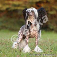 Dogland Happy Tsar Zverey