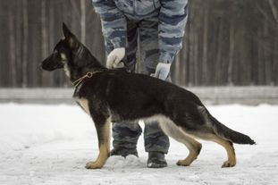 Winner Hund Furija