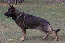 Taro von Burg Tiersperg