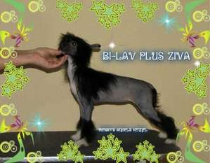 Bi-lav Plus Ziva