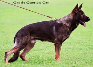 Qas de Querien-Can