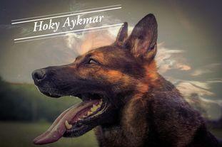 Hoky Aykmar