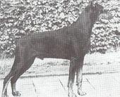 Miko von Fürstenfeld