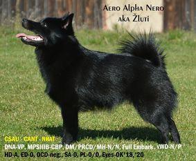 Aero Alpha Nero