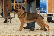 Pups Hopper vom Brachtpetal & Magic von Haus Erpabo