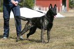 Canine For Use Jägermeister