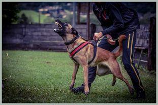 Brianna vom Giannioti Sports Dog