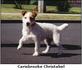 Carisbrooke Christabel