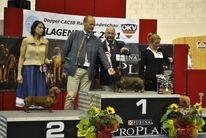 Miró LOI B2100275/08/43264/T