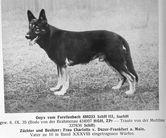 Onyx vom Forellenbach