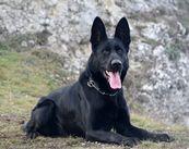 Atena Canis Club Moravia