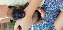 Puppy 11 days