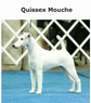Quissex Mouche