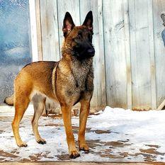Dog John's Rafale