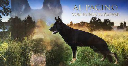 Al Pacino vom Peiner Burgpark