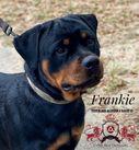Core's Frankie