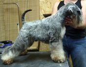 Dog Otho's Ivanhoe