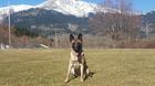 Bomra vom Giannioti Sports Dog