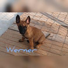 Werner vom Holzhäuser Flur