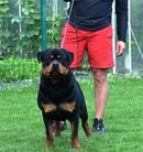 Bosco vom Hanfburg