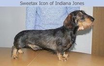 Sweetax Icon of Indiana Jones
