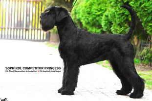 Sophirol Competitor Princess