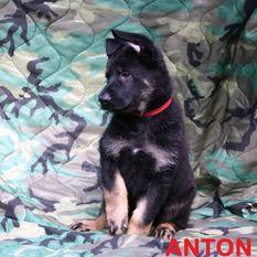 Anton von Charlie Oscar