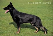 Pino Bett Silver