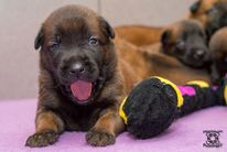 Pups Nyka & Arco nu 17 dagen oud