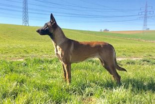 Fame Force Canina