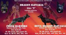 Fešák Barnero X Devil Dragon Slovakia