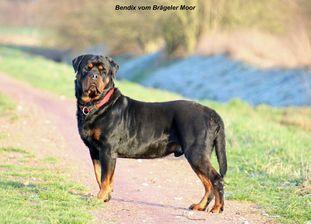 Bendix vom Brägeler Moor