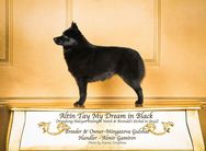 Altin Tay My Dream In Black