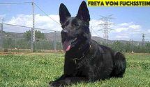 Freya vom Fuchsstein