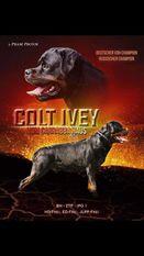 Colt Ivey vom Carrabba Haus