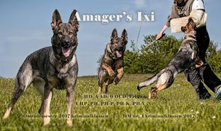Amager's Ixi