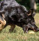 Bashra vom Wolfsgraben