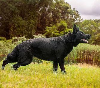 Amaya vom Wolfdame